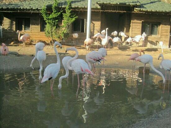 乌鲁木齐动物园