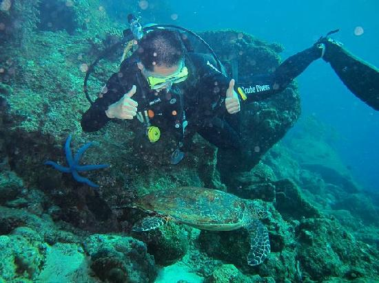 Lumba Lumba Diving Centre : diver and turtle