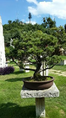 Huangguoshu Bonsai Garden