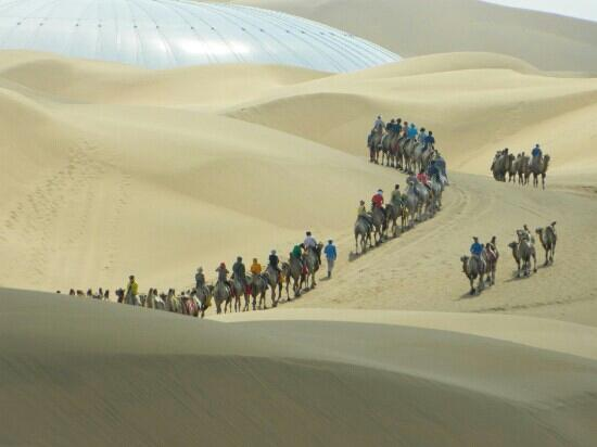 Whistling Dune Bay Tourist Scienc Spot: 驼队