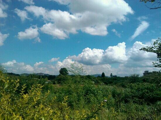 Big Shield Forest Park: 远眺大坪