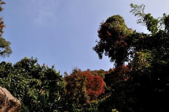 Qinyuan Mountain: 清源山