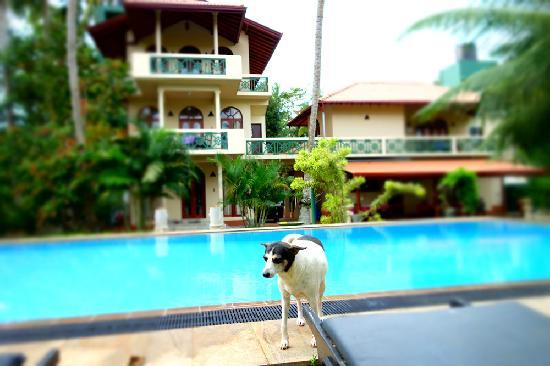 Shangri-Lanka Villa: 泳池旁