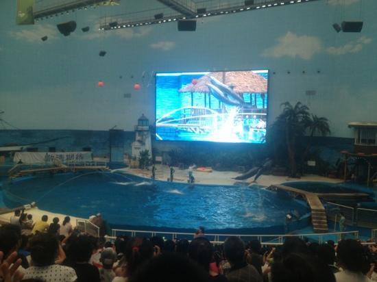 Tianjin Haichang Polar Ocean World : 海豚表演