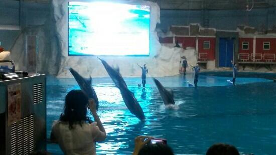 Qingdao Haitun Show Hall: 海豚表演