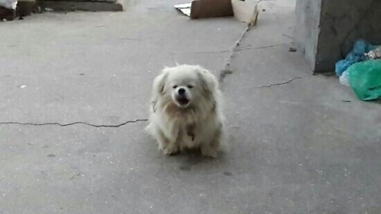 Guapi Island: 旺海渔家的狗狗 已经12岁了