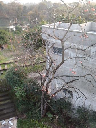 Maozhou Island Villa Hotel: 枯藤老树