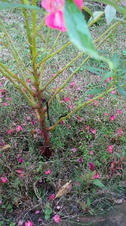 Naturalhome Hotel Moganshan Deqing: 庭院中悠闲的小虫
