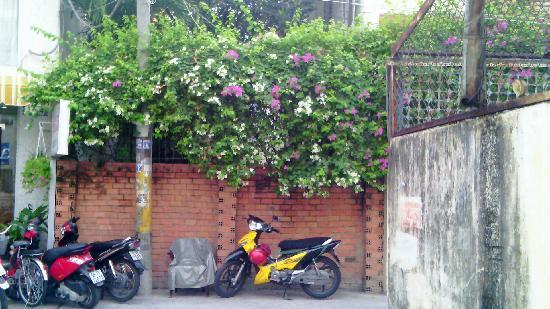 Khoi 2 Hotel: 酒店门前盛开的鲜花