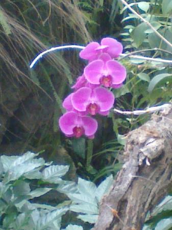 Wuhan Botanical Garden : 花
