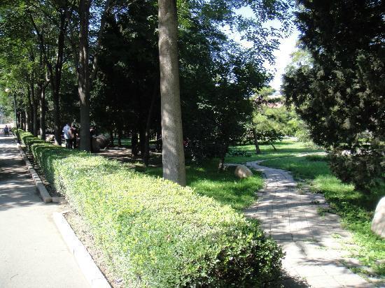 Tongzhou Xihaizi Park : 很绿