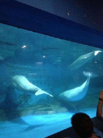 Laohutan Scenic Park: 白鲸