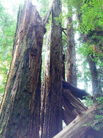 Jedediah Smith Redwoods State Park : state park