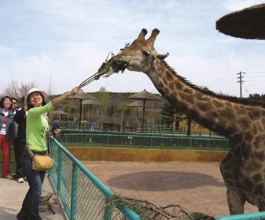 Shenyang Forest Wild Animal Zoo: 哈哈