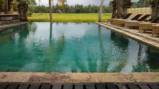 Green Field Hotel & Restaurant : 小型无边泳池,大概25米