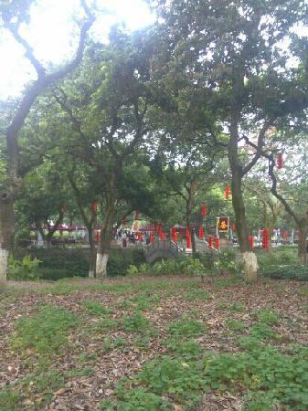 Zhangba Longan Garden: 刚改造完 还不错
