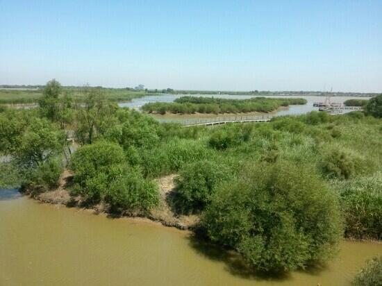 Dongying Huanghe Delta : 濕地