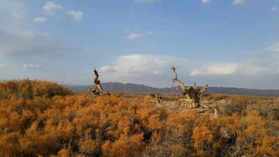 Original Populus Euphratica: 木垒胡杨林