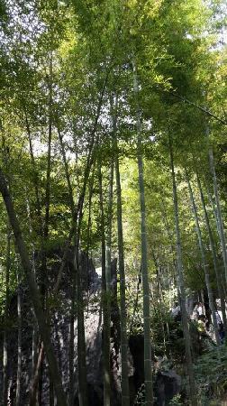 Leiyang, Китай: 耒阳竹海