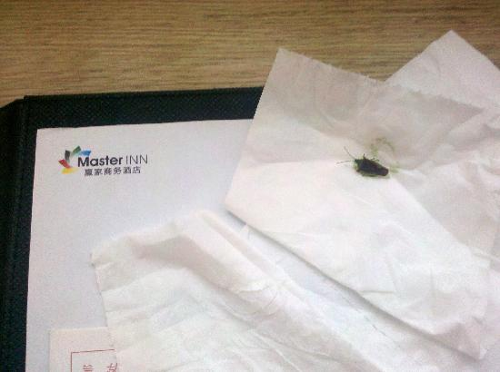 Master Inn Beijing : 在房间内发现的,趴在床边窗纱上