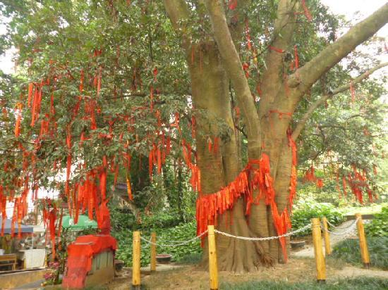 Liangfeng River Forest Park of Nanning: 许愿树