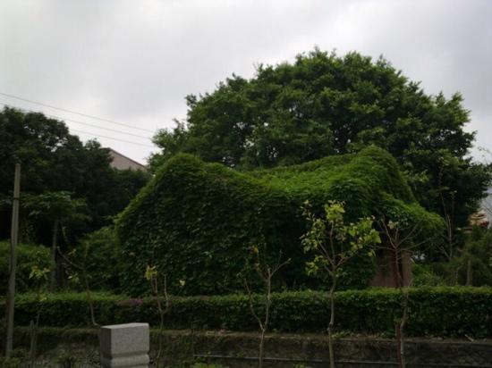 Forest Park, Quanzhou: 泉州森林公园
