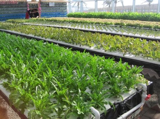 Wancheng Ecology Garden