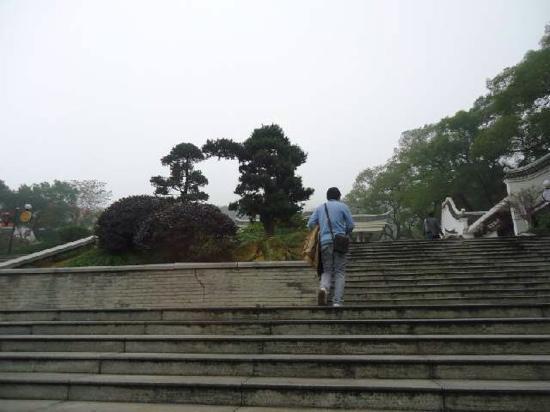 Mount Yuelu : 不错