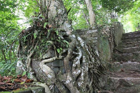 Pingxiang Friendship Gate: 友谊关景区山上的树