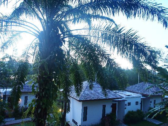 The Mangrove Panwa Phuket Resort : 树木绿植