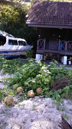 Perhentian Paradise Resort: 我们住的房间外面