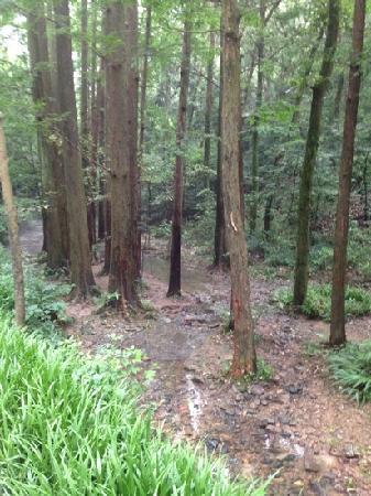 Jiuxi 18 Stream: 九溪