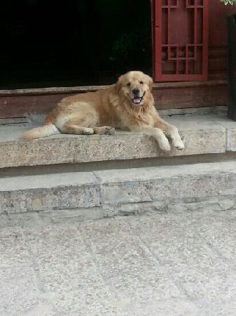 Dali Gucheng - the Old City: 古城里安静的狗狗
