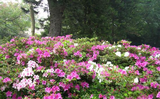 Zhongshan Park: 1