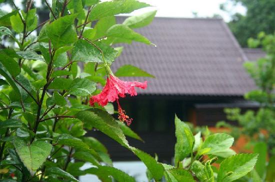 Phi Phi Natural Resort : 房间门口的花