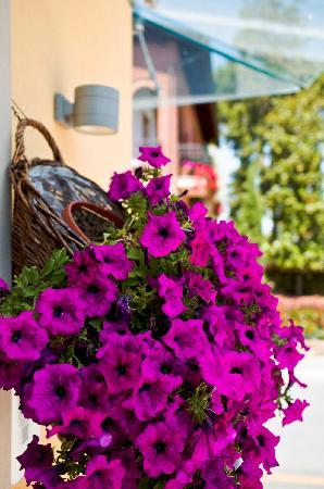 Hotel Corsignano - Pienza: 酒店门口的鲜花