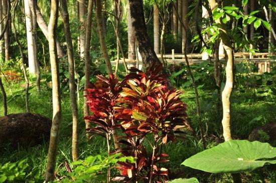 Xinglong Tropical Botanical Garden: 植物园