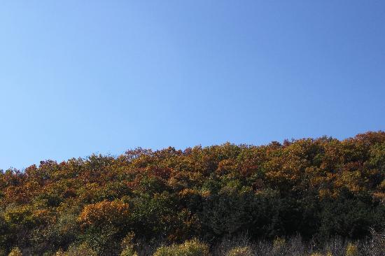 Labagou Scenic Forest Scenic Resort: 喇叭沟