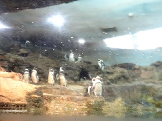 Ji Di Guan - Pole Aquarium.: 1