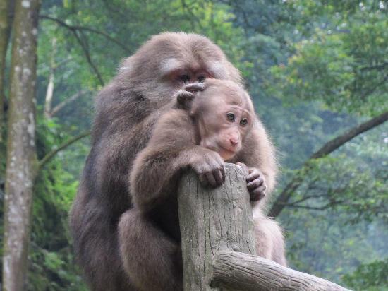 Pinghu Mount Villa: 猴区