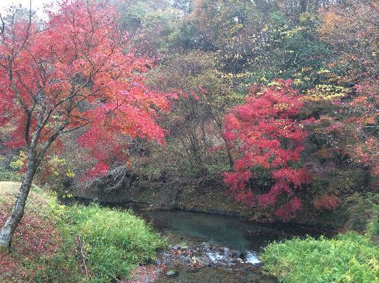 Ubuyama-mura, Japonia: 水很清澈