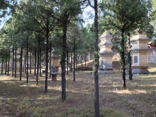Pagoda Forest of Shaolin Temple: ok