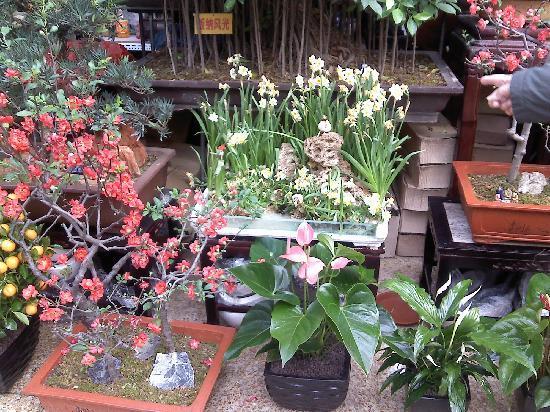 莱太花卉市场