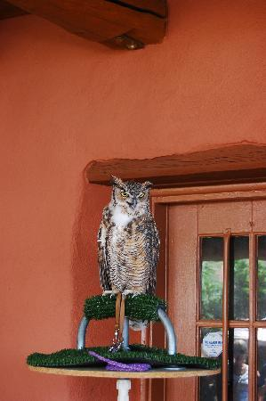 Red Rocks Park and Amphitheatre : 猫头鹰