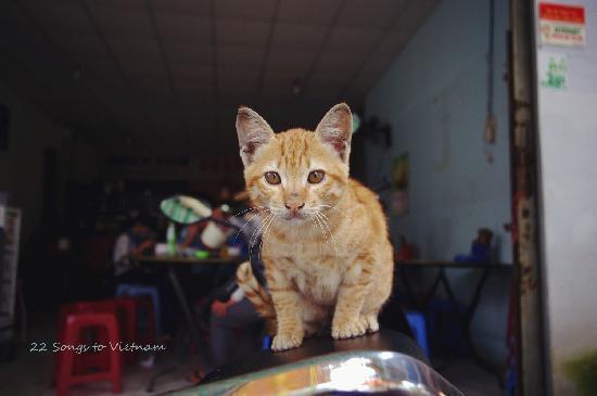 Hoang Loc Villa Hotel: cat