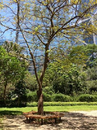 Cheung Kong Park : 闹市区中的小公园