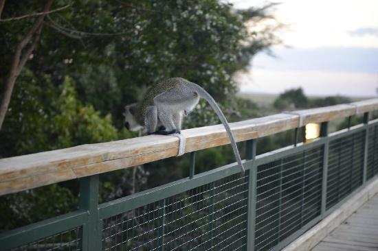 Mara Leisure Camp : 通往马赛马拉的小桥