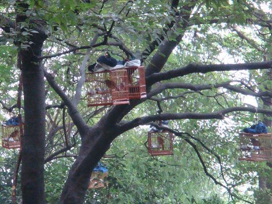 Gu Shan (Solitary Hill): 1