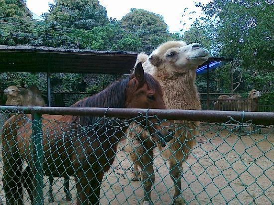 Nanning Zoo : 南宁动物园