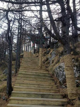 Taibaishan National Forest Park : 板寺步道